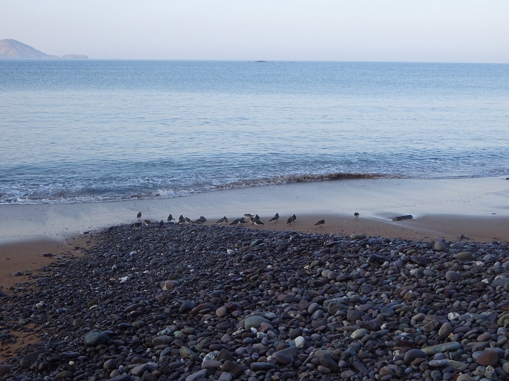 Birds of Waterville Beach 19
