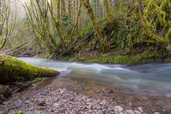 Wolf Creek (Mike_100) Tags: wolfcreek creek stream moss trees slowwater water oregon pacificnorthwest