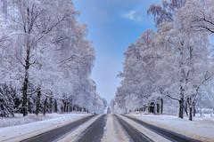 Mini adventure (Jurgis Kreilis) Tags: road roadtrip winter snow latvia nature outdoors patterns trails straight hdr
