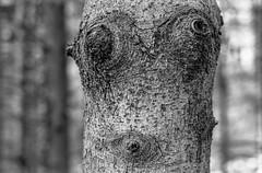 Forest (::ErWin) Tags: kodakprofessionaltrix400 camerabody1 meta35 forest tree film bw blackwhite monochrome baum schwarzweis canon1v kodak tx400 trix