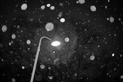 Snowflakes (richard.kralicek.wien) Tags: blackandwhite snow winter