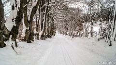 En route vers la neige (Lцdо\/іс) Tags: neige snow snowy way road white winter waimes wallonie wallone région eifel walk nature ardennen ardennes ardenne belgique belgium belgie eastbelgium europe europa travel trip treking trekking walking tree