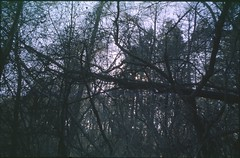 (✞bens▲n) Tags: pentax lx provia 100f takumar 28mm f35 film analogue slide trees branches
