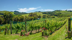 181122_150 Winery Waiheke Island, New Zealand (MiFleur...Thanks for visiting!) Tags: newzealand travel waihekeisland