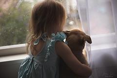 Friends ({jessica drossin}) Tags: jessicadrossin childhood dog pet window rain curtai child wwwjessicadrossincom