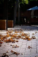 Windy courtyard (.Stephen..Brennan.) Tags: da70 fremantle pentax pentaxk3 70mm perth westernaustralia australia au
