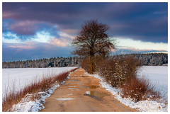 Campagne enneigée (Pascale_seg) Tags: paysage landscape winter hiver inverno paesaggio neige snow neve winterland winterscape countryscape field champ campagne chemin sapins arbre tree