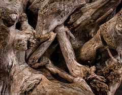 Driftwood Textures (Ramona H) Tags: deceptionpass deceptionpassstatepark abstract drift driftwood hiking winter wood