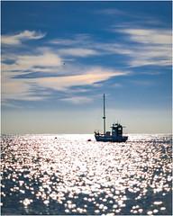 la Mer (niggyl (well behind)) Tags: leica leicam240mp leicamp m240 rangefindercamera rangefinderlens leicadigital contax contaxcarlzeiss contaxglenses contaxg35mmf20 contaxg legacyglass legacylenses vintagelenses manualfocus manualondigital classicalglass nikcollection nikcolorefexpro colorefexpro tasmania bichenotasmania waubsbay jettybay tasmansea seaside summer sunshine beach sea ocean boats seagull contrejour backlit backlighting frankenzeiss