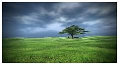 The Meadow (Saga Mea) Tags: meadow landscape grass green nature tree sl secondlife virtualworld digitalart 3dart poem