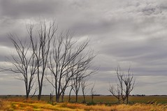 Flatlands (holly hop) Tags: treemendoustuesday trees bare barren farm wimmera centralvictoria australia summer dry clouds abctvweather 100x