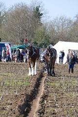 Ploughing (Katie~B) Tags: ploughing farming farm spring horses plough furrow soil earth carthorses