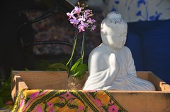 White buddha, Indian cloth-covered tray, and pink orchid (jungle mama) Tags: orchid orchidfestival fairchildtropicalbotanicgarden fairchildgarden susanfordcollins tray buddha prayer whitebuddha