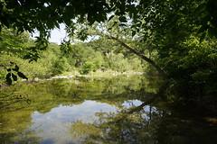 Austin: Barton Creek Greenbelt (zug55) Tags: austin bartoncreekgreenbelt texas bartoncreek greenbelt centraltexas texashillcountry hillcountry zeiss batis