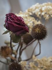 Dried flowers / Сухоцветы (mixail.rturisto) Tags: driedflowers роза сухоцветы букет