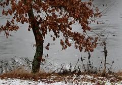 (Gerlinde Hofmann) Tags: germany thuringia village bürden pond tree oaktree