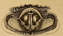 laryngoscopy image