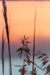 Soft Sunrise (NathalieSt) Tags: autresmotsclés camargue europe france gard languedocroussillon legrauduroi etang leverdesoleil nature nikon nikond750 nikonpassion nikonphotography sunrise