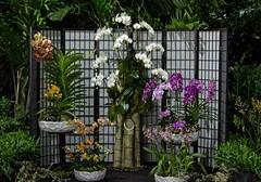 Orchids (ACEZandEIGHTZ) Tags: orchids display flowers tamiamiintlorchidfestival miami florida 2019 nikon d3200