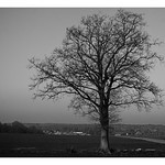 Tree alone thumbnail