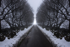 Out of the shadows and into the light (Phil-Gregory) Tags: nikon d7200 tokina1120mmatx tokina wideangle ultrawide derbyshire peakdistrict snow light trees mirrorimage scenicsnotjustlandscapes path mamtor