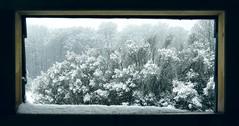 Shelter (F VDS) Tags: cabin snow storm forest sonian d4s winter landscape nature monochrome