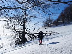 ágas-bogas / branched (debreczeniemoke) Tags: tél winter hó snow túra hiking hegy mountain gutin gutinhegység gutinmountains fa tree olympusem5