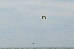 2018_08_15_0153 (EJ Bergin) Tags: sussex westsussex worthing beach seaside westworthing sea waves watersports kitesurfing kitesurfer seafront lewiscrathern