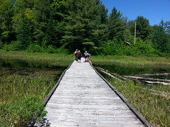 MINDEN ONTARIO CANADA (bitemeasshole69) Tags: landscape scenery picturesque pinetrees view solace peaceful camp specialneeds excellent caring attentive independent camping roughingit activities participaction spring2018 boardwalk beaverdam water beautiful trees forests adventure fun kinarccamp kinarc minden