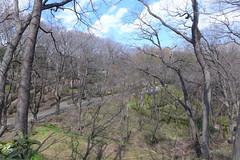 19o1707 (kimagurenote) Tags: tree 東高根森林公園 higashitakane forest park 川崎市宮前区 miyamaekawasaki