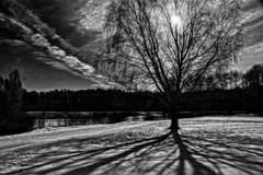 Spring sun (prokhorov.victor) Tags: весна природа солнце дерево пейзаж