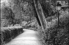(Jeremy Whiting) Tags: florence firenze italia italy public park gardens bardini path empty where people analog analogia analogue 35mm canon ae1 vintage tourist