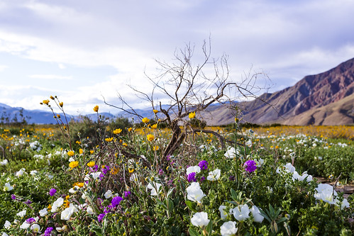 Bouquet of wildflowers and dead tree
