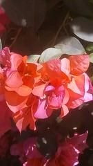 Flor rosa (orionqazar_149) Tags: naturaleza parque fotgrafia tumblr noche dia bonito verde cielo azul arboles luz flores pasto arte