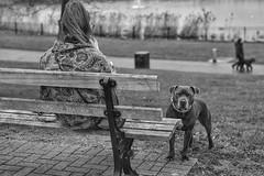 One woman and her dog. (Steve.T.) Tags: blackandwhite bnw mono dog pitbull terrier pitbullterrier promenadeparkmaldon maldon essex bench sitting inapark sittingonabench nikon d7200 50mmlens 50mm maldonprom candid