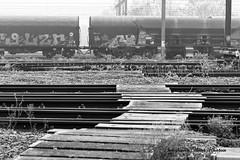 N&B_20181228_115458_0016 (Olivier_1954) Tags: natureetpaysages paysages arbres bouclenoir crpc canal nb végétaux brouillard brume chemindefer formation gare givre halage rail wagon charleroi hainaut belgique be