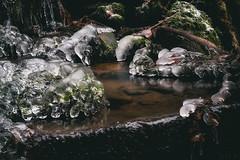 (a└3 X) Tags: natur nature alexfenzl olympus sonne licht wald österreich neustift austria landscape outdoors color tree bäume wildlife 3x forrest a└3x wow availablelight