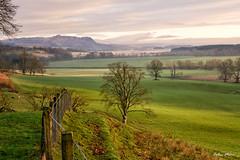Fence, Tree & Beyond - 2019-01-20th (colin.mair) Tags: aberfoyle gartmore scotland sunrise tree countryside dawn fence goldenhour