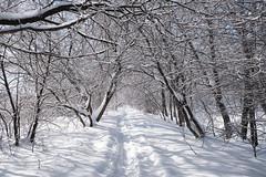 arbres_0365_escarpement glacé_DSF1609 (J-P Rioux) Tags: jprioux fujifilm fuji xt3 escarpement sentier neige