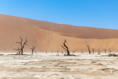 _RJS4632 (rjsnyc2) Tags: 2019 africa d850 desert dunes landscape namibia nikon outdoors photography remoteyear richardsilver richardsilverphoto safari sand sanddune travel travelphotographer animal camping nature tent trees wildlife