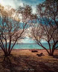 Tamarixes (EvNikolas Photography) Tags: skopelos island greece europe sea sky trees tamarixes nature sunny beach nikon nikond3200 photography nikolasevaggelinos evnikolasphotography