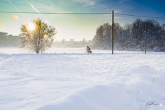 Munich (Luca Angelini) Tags: monaco munich neve snow backlight controluce foglie ghiaccio ice leaf light luci night notte silhouette