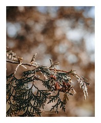 DSC_0032-1 (PhotoByNelson) Tags: nikon niagara nature canada ontario welland beautiful lightroom photography d5600 bokeh creative