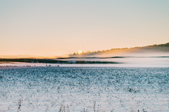 Mist (jennydasdesign) Tags: landscape landskap sweden sverige sonyslta57 dt50mmf18sam 50mm snow winter kristinehamn sunset mist goldenhour