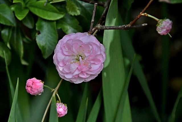 Обои цветок, макро, ветка, бутоны картинки на рабочий стол, раздел цветы - скачать