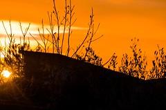 Sunrise (salernolorenza) Tags: nikon controluce alba backlight silhouette sunrise
