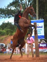 Lucas Saucco e Clarito (Eduardo Amorim) Tags: gaúcho gaúchos gaucho gauchos cavalos caballos horses chevaux cavalli pferde caballo horse cheval cavallo pferd pampa campanha fronteira quaraí riograndedosul brésil brasil sudamérica südamerika suramérica américadosul southamerica amériquedusud americameridionale américadelsur americadelsud cavalo 馬 حصان 马 лошадь ঘোড়া 말 סוס ม้า häst hest hevonen άλογο brazil eduardoamorim gineteada jineteada