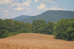walker county georgia (65mb) Tags: 65mb northgeorgia cornfield pigeonmountain walkercountygeorgia agriculture northwestgeorgia northgeorgiamountains landscapes