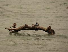 3 Vögel vorm Schwimmen