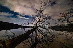 Nachts am Laacher See (clemensgilles) Tags: astrophotography astrophotographers nightphotography caldera lakeside trees beautiful laachersee see deutschland eifel germany